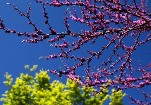 blossims_1