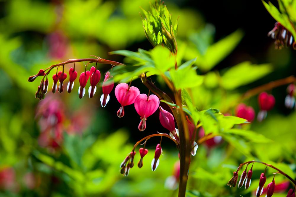 Amazing_red_flower_1